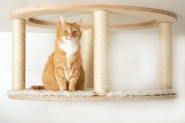 Katzenmöbel, Katzenbedarf