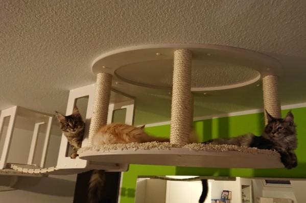 Katzen Möbel Goldtatze