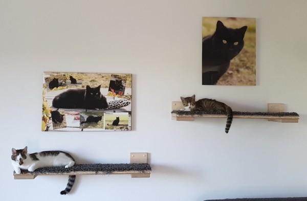 Katzenmöbel Goldtatze Catwalk